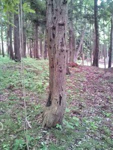 立ち木の伐採