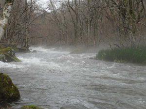 雨、霧の十和田湖 奥入瀬渓流